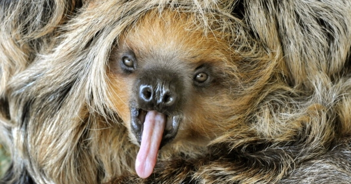 According to a new documentary airing on Animal Planet on March 4, sloths are not as lazy as we think.</p>