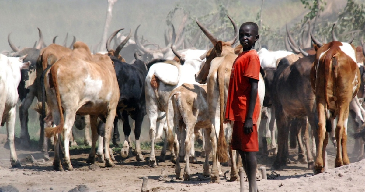 A Sudanese boy rounds up cattle in a camp in a southern Sudanese settlement in the state of Jonglei. Cattle theft between tribes is blamed as one of the prime causes of inter-tribal conflict.</p>
