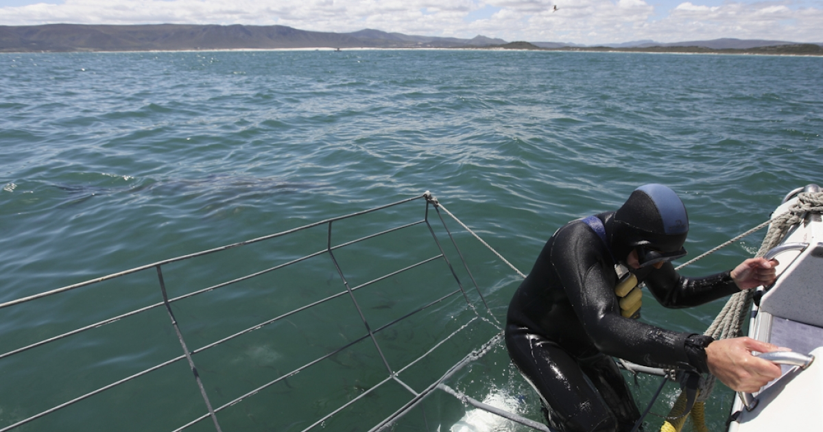 A tourist enters a diving cage to get up close to a Great White Shark in Gansbaai, South Africa.</p>