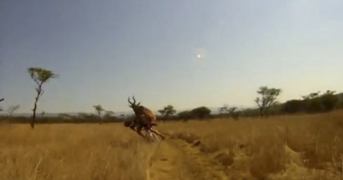 A South African mountain biker is T-boned by an antelope, identified as a Red Hartebeest, during a race in KwaZulu-Natal province, in this still from a YouTube video.</p>