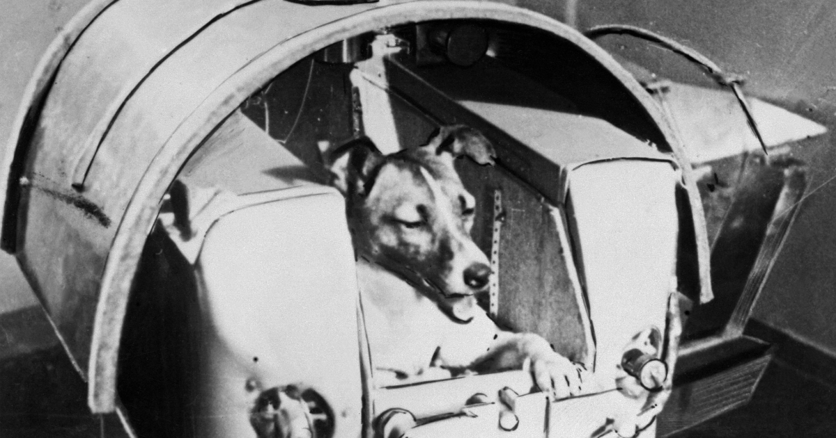 A Nov. 1957 photo of the dog Laika, the first living creature ever sent into space, aboard Soviet spacecraft Sputnik II. Laika died a few hours after the launch from stress and overheating, which was likely due to a malfunction in the thermal control system.</p>