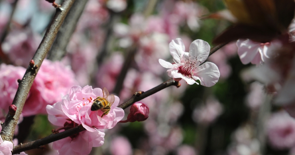A new study suggests that global warming resulted in the earliest spring flowers in US history in 2010 and 2012.</p>