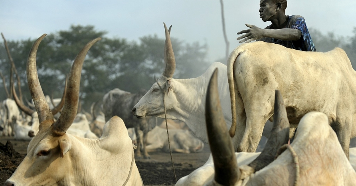A herdsman from the Dinka tribe is pictured near South Sudan's central town of Rumbek on November 13, 2011. South Sudan is coping with frequent bouts of cattle banditry while across the border to the north, Sudan President Omar al-Bashir is challenged by several different rebels groups.</p>