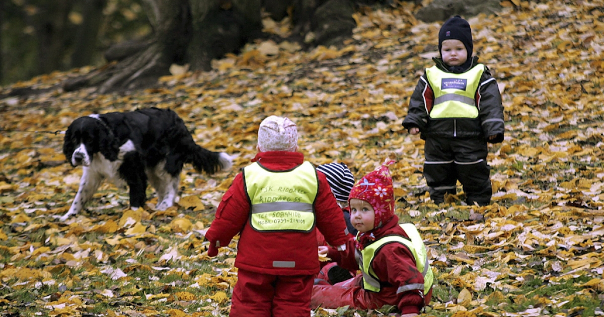 Swedish children from a kindergarden wear their obligatory traffic safety vests while playing in a Stockholm park.</p>