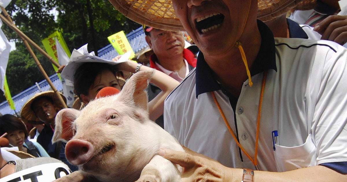 A Taiwanese pig farmer displays a piglet during a demonstration outside health department headquarters in Taiwan.</p>