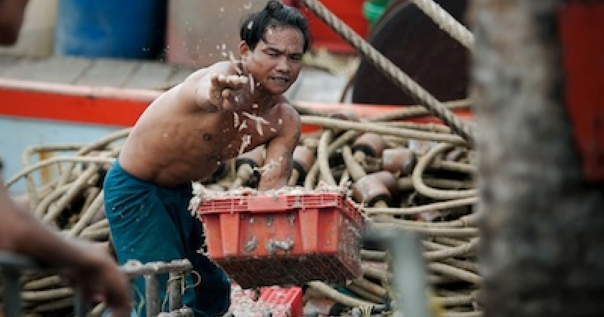 A migrant laborer sorting fish on a Thai vessel in 2011.</p>