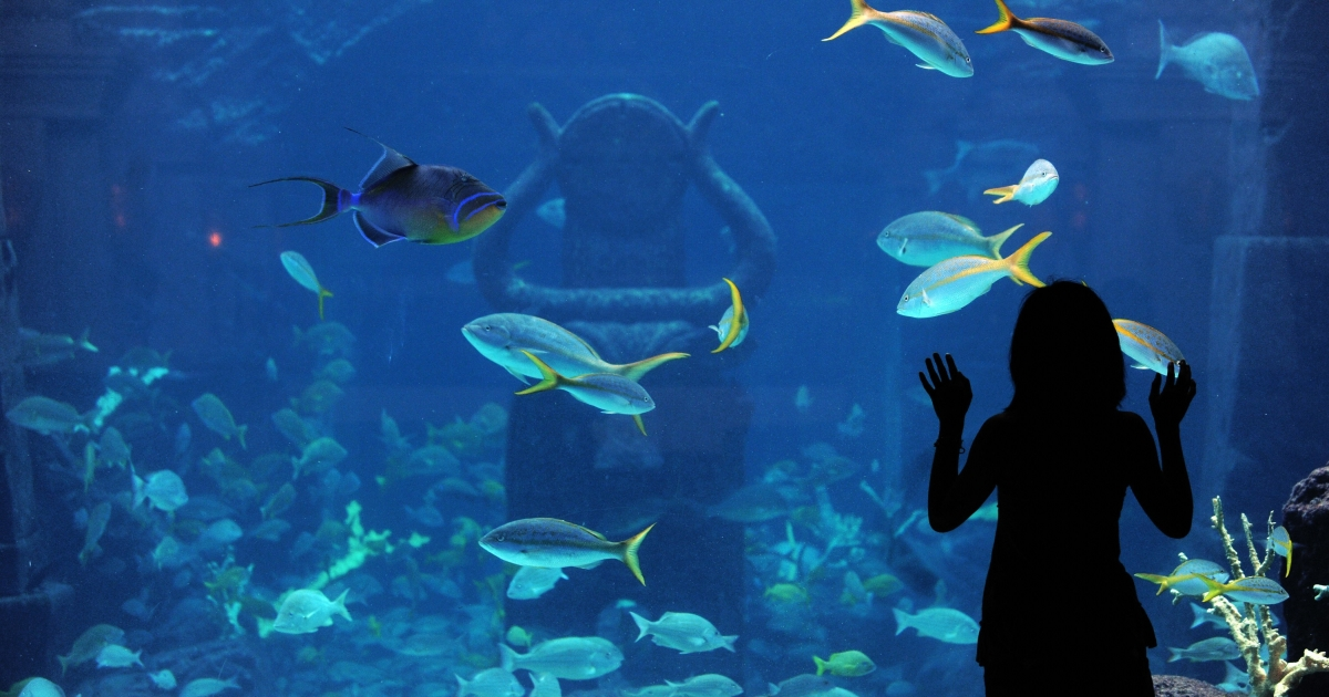 A tourist admires fishes in an aquarium at a resort in Nassau, the Bahamas, on May 29, 2009.</p>