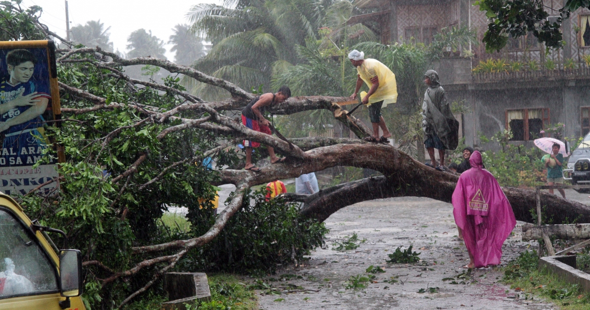 Workers clear a road with a fallen tree after Typhoon Bopha hit the city of Tagum, Davao del Norter province, on the southern island of Mindanao on December 4, 2012. Typhoon Bopha smashed into the southern Philippines early December 4, as more than 40,000 people crammed into shelters to escape the onslaught of the strongest cyclone to hit the country this year.</p>