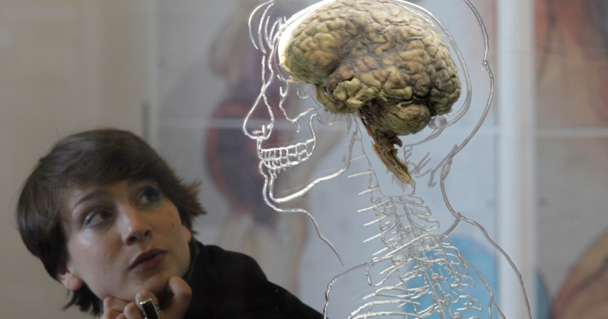A human brain is displayed in a museum at the @Bristol attraction on March 8, 2011 in Bristol, England.</p>