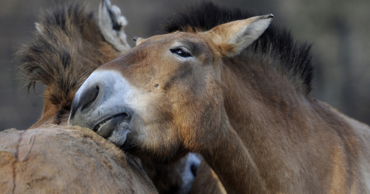 Congress has lifted a ban on horse slaughter in the US, which could lead to human consumption of the animal.</p>