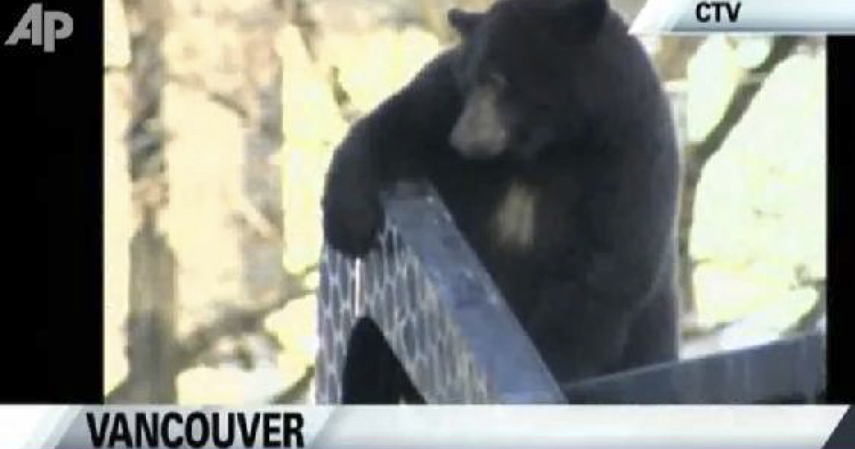 In downtown Vancouver, Canada, a bear takes a ride on a garbage truck. The bear is thought to have been foraging in the dumpster. It was tranquilized and returned to the wild.</p>