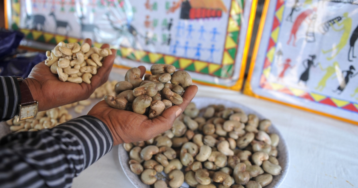 An Indian man holds up cashews.</p>