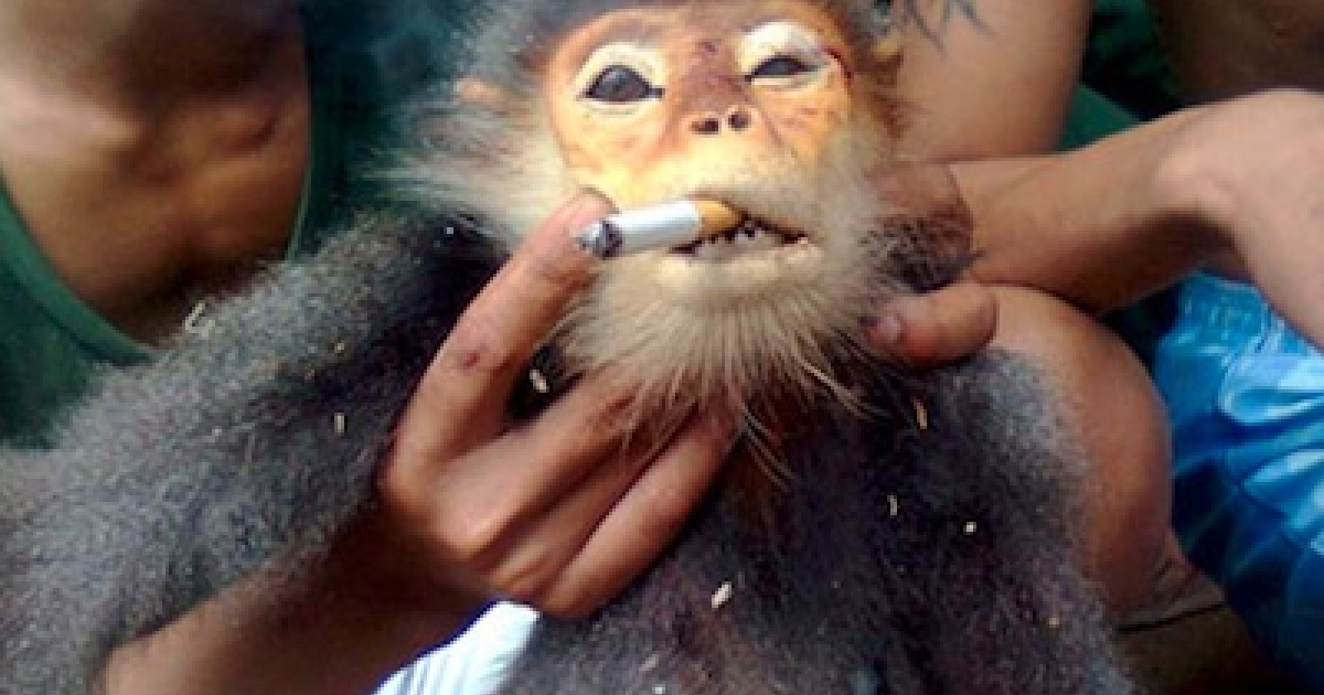 Photos posted online of Vietnamese troops abusing rare monkeys and forcing the primates to smoke have pressured Vietnam's army to fire a soldier.</p>