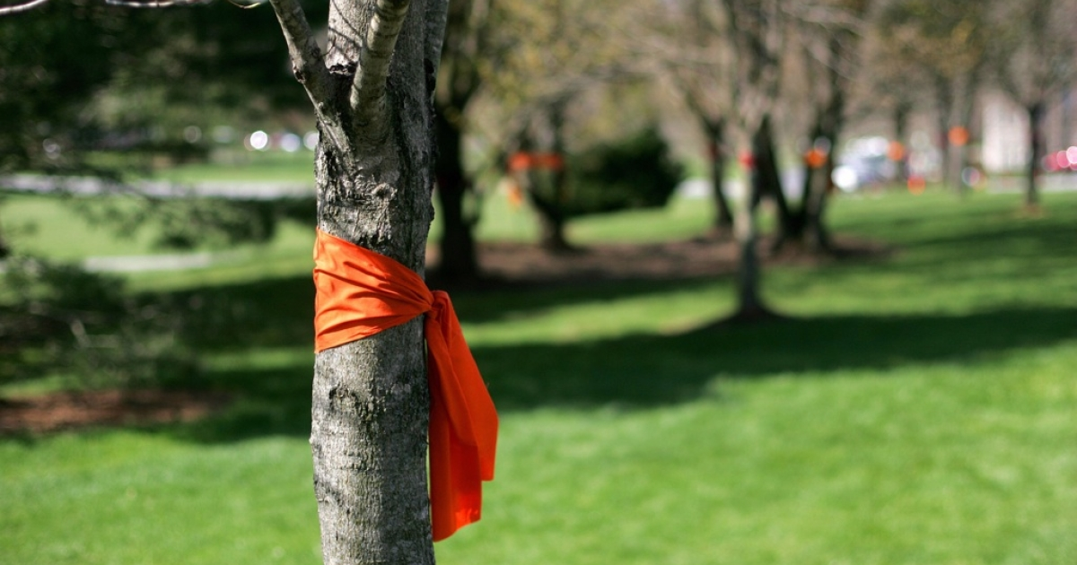 Trees are tied with ribbons of Virgina Tech school colors, orange and crimson, on April 20, 2007, on the campus of Virginia Tech University in Blacksburg, Virginia. Thirty-two students and teachers were shot dead on the university campus by a student, who later killed himself.</p>
