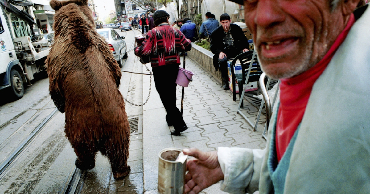 Angel Angelv, center, with his colleague Todor and dancing bear 'Gosho' perform on the streets of Sofia, Bulgaria for small change. The bear is pierced through his nose and led on a metal pole, a tether that keeps him from attacking humans.</p>