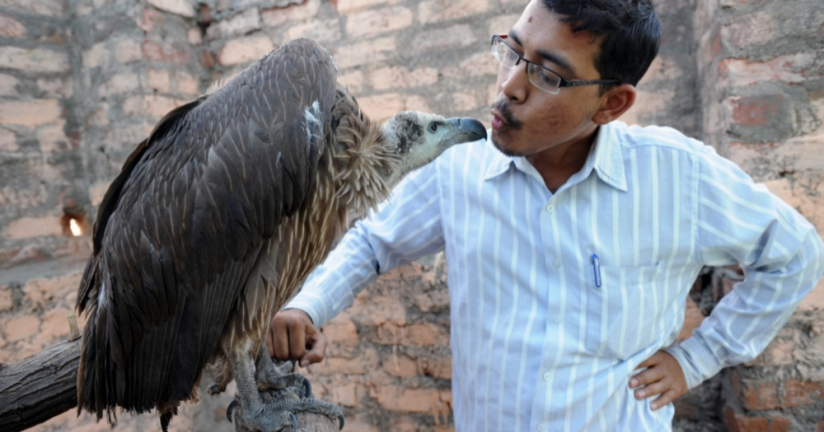 Founder of the Asha Foundation animal shelter and hospital Harmesh Bhatt plays with Maya, an Indian vulture, at Hathijan village, some 20 kms from Ahmedabad, on January 16, 2010.</p>