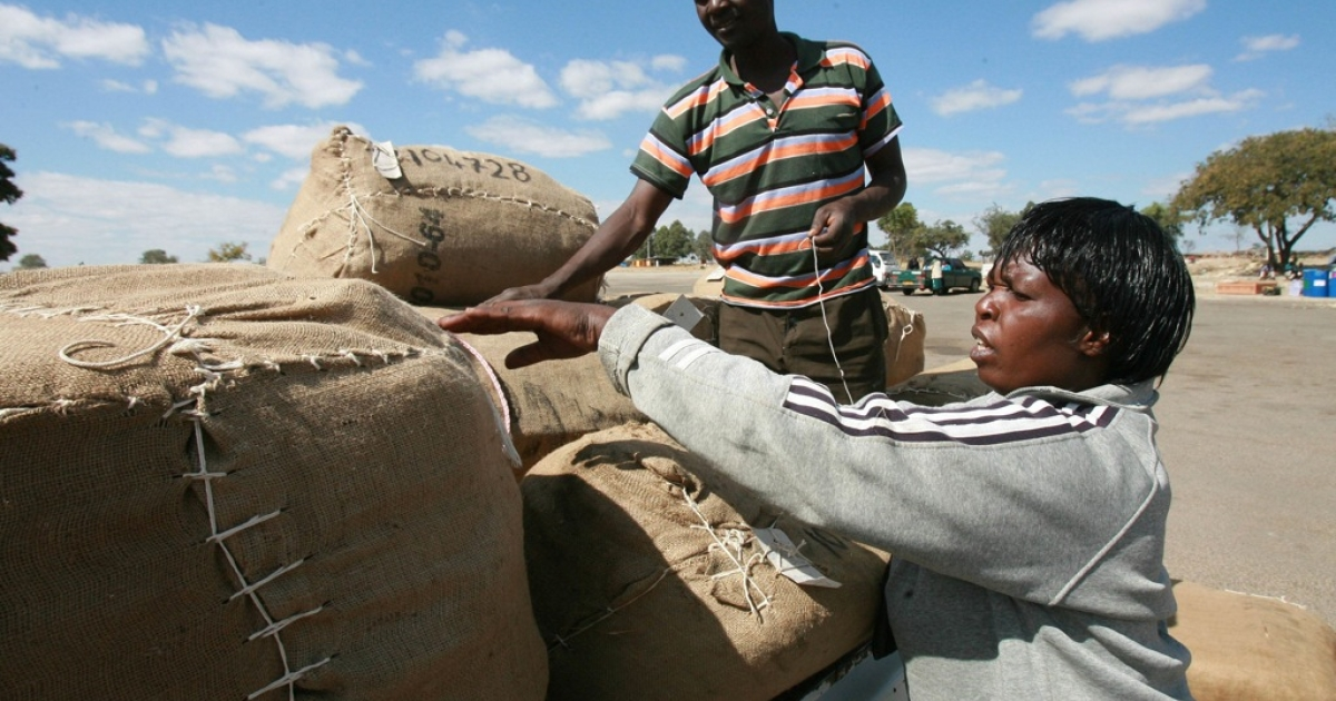 Zimbabwean farmers unload tobacco bales at one of the main auctions in Harare on August 4, 2010.</p>