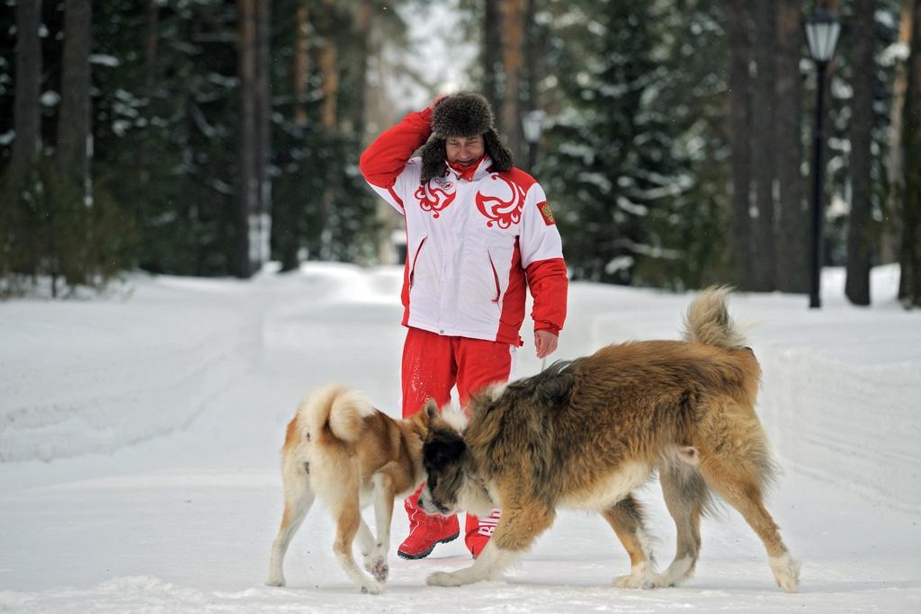 Vladimir Putin Dog Buffy Buffy  a Bulgarian