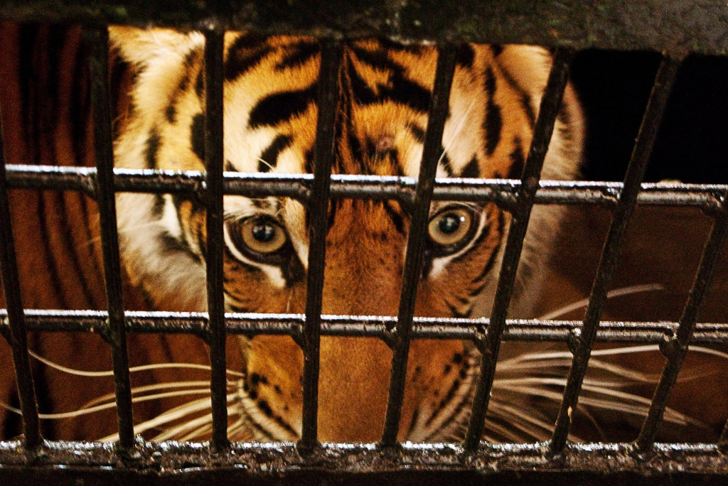 6 endangered animals that poaching might take from us
