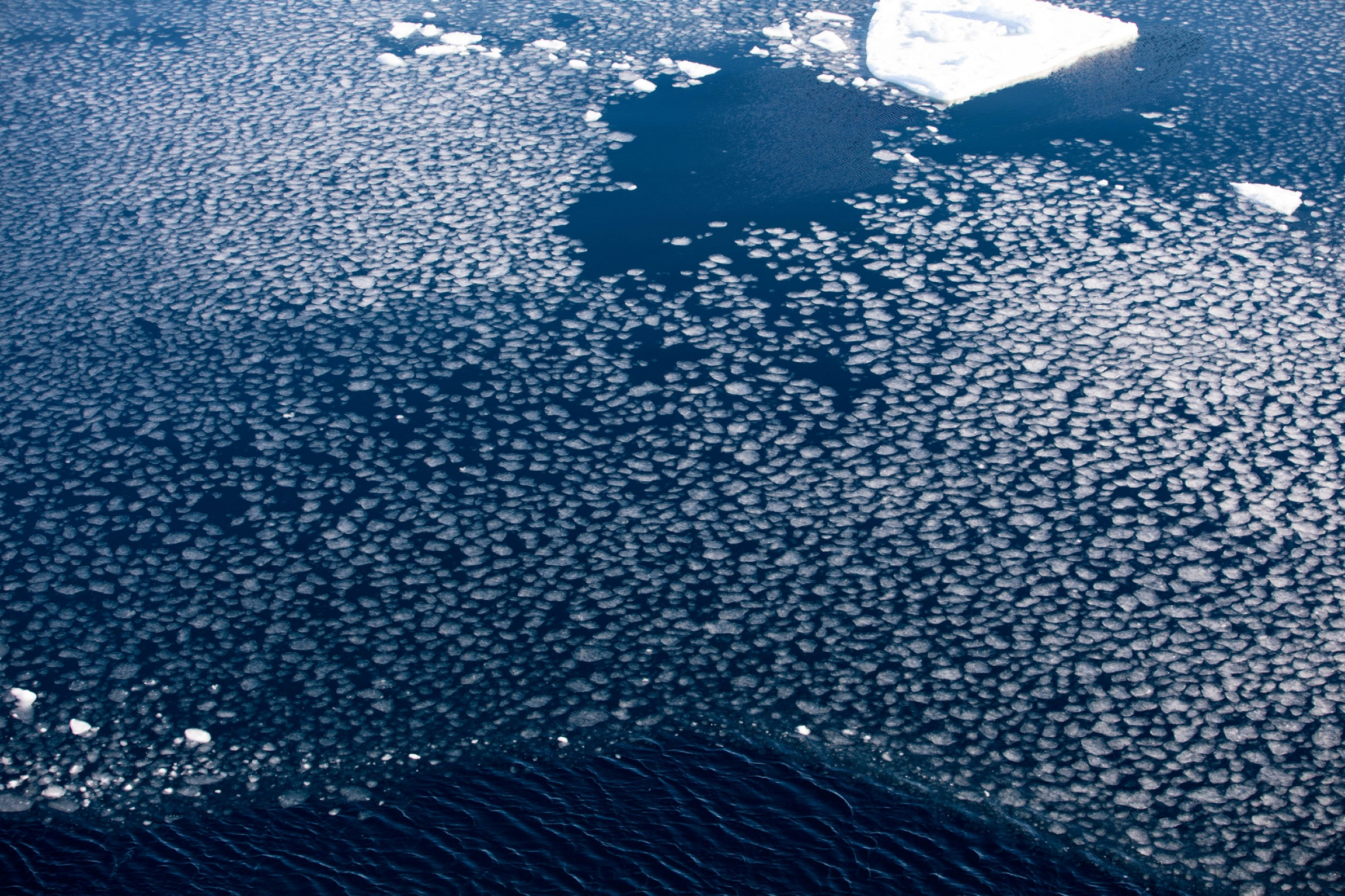 Thousands of circular white pieces of ice are show across the photo.