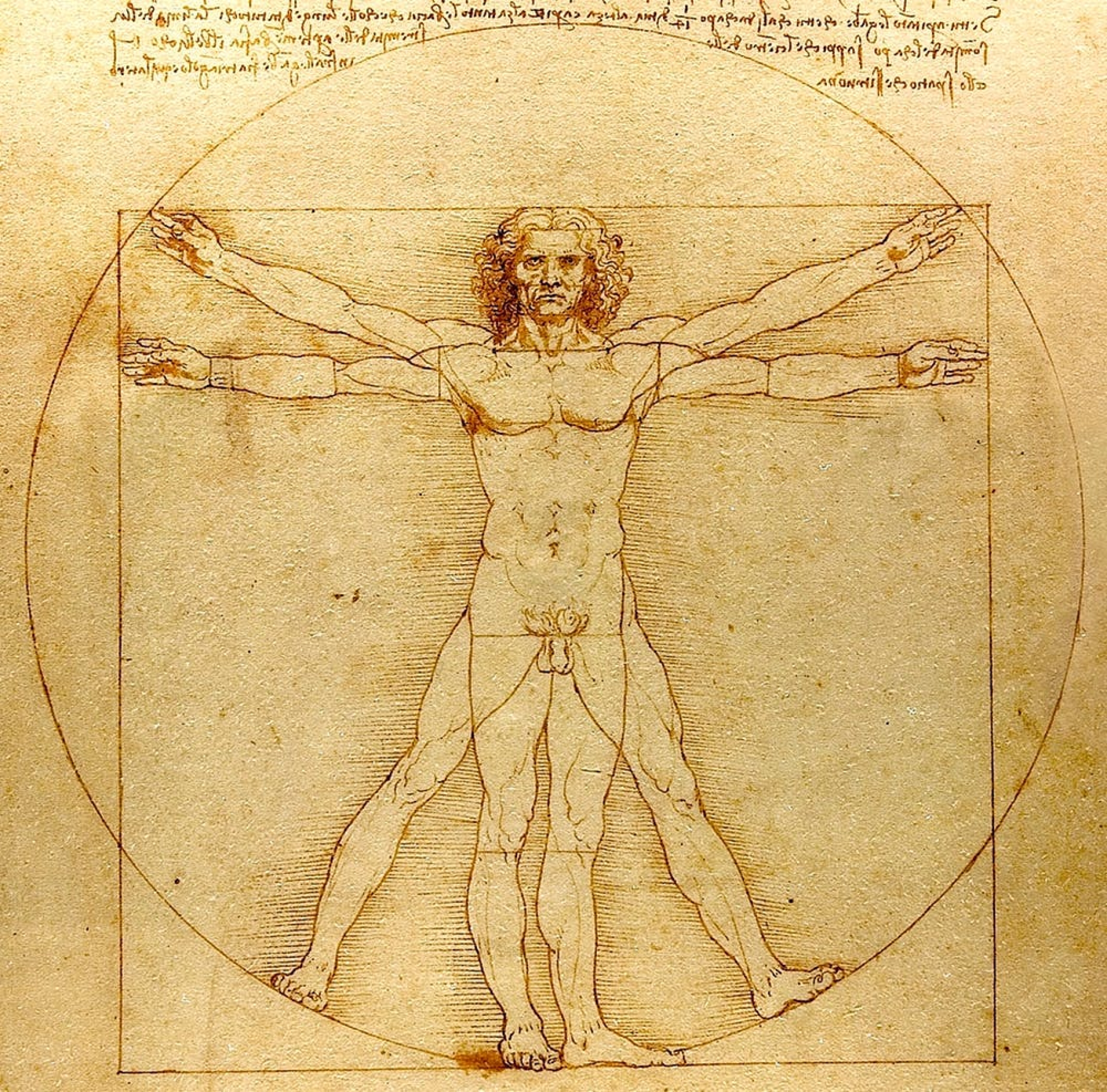 virtuvian man by da vinci