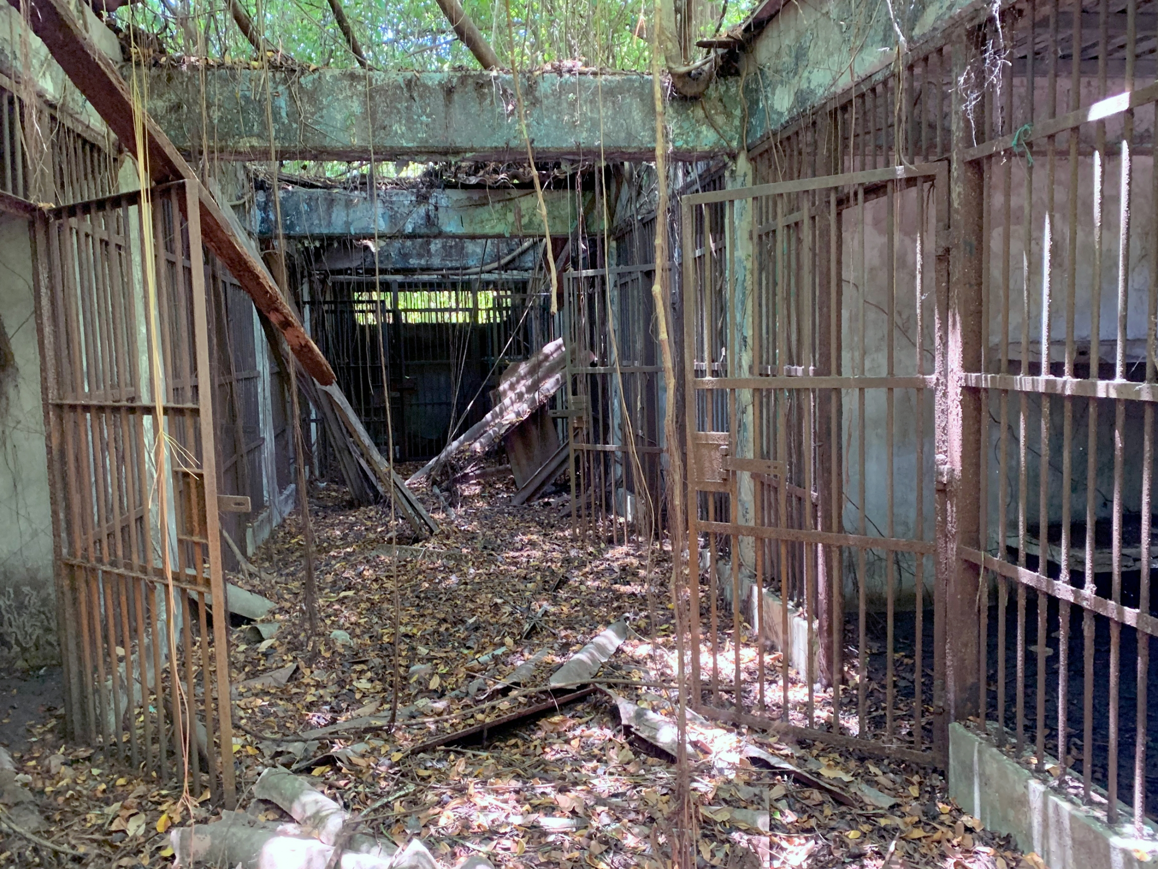 A former prison is covered in vines and the metal bars have rusted over