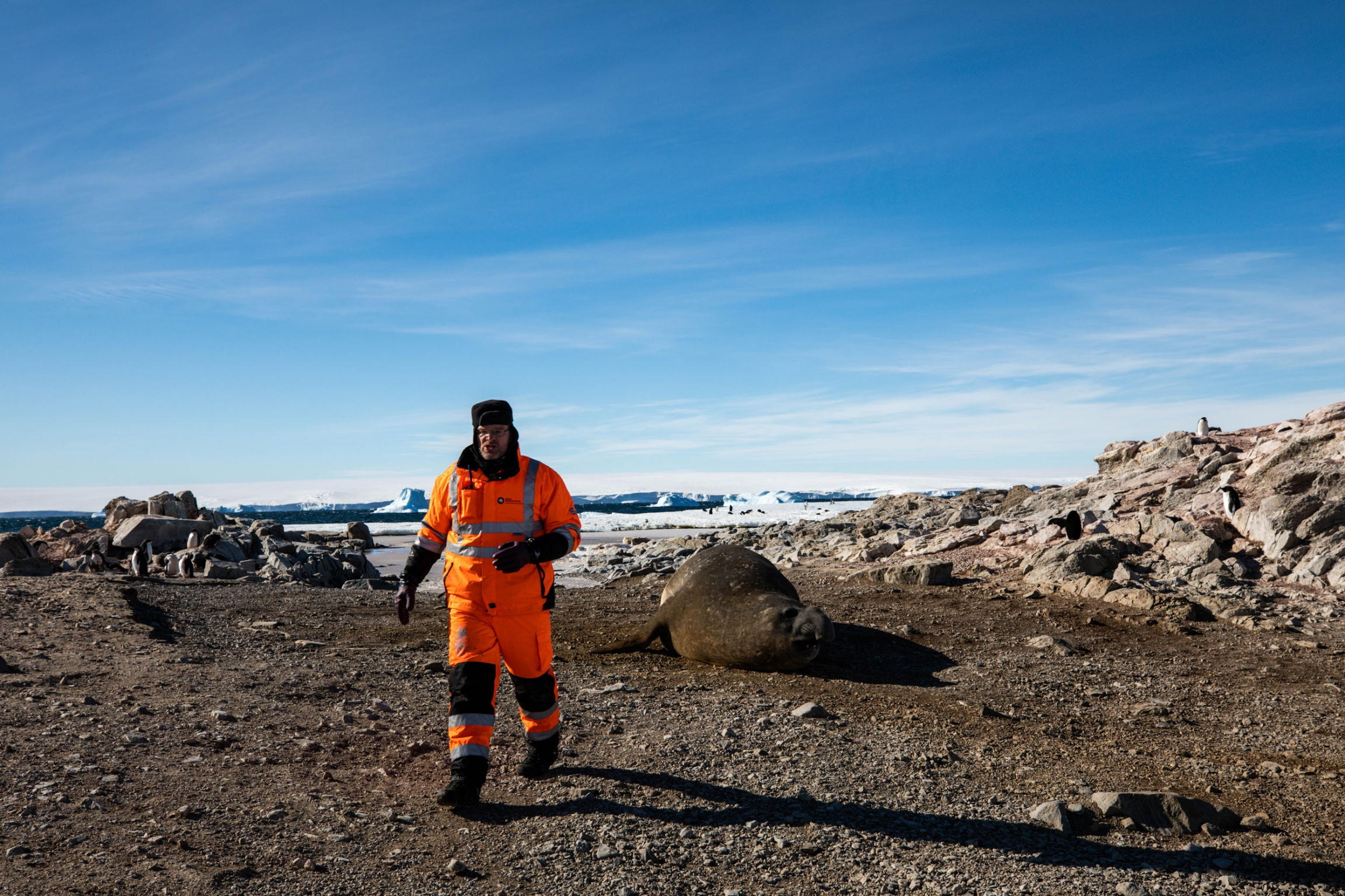 Lars Boehme is shown wearing orange cold-weather outer gear and walks away from an elephant seal laying on the gravel.