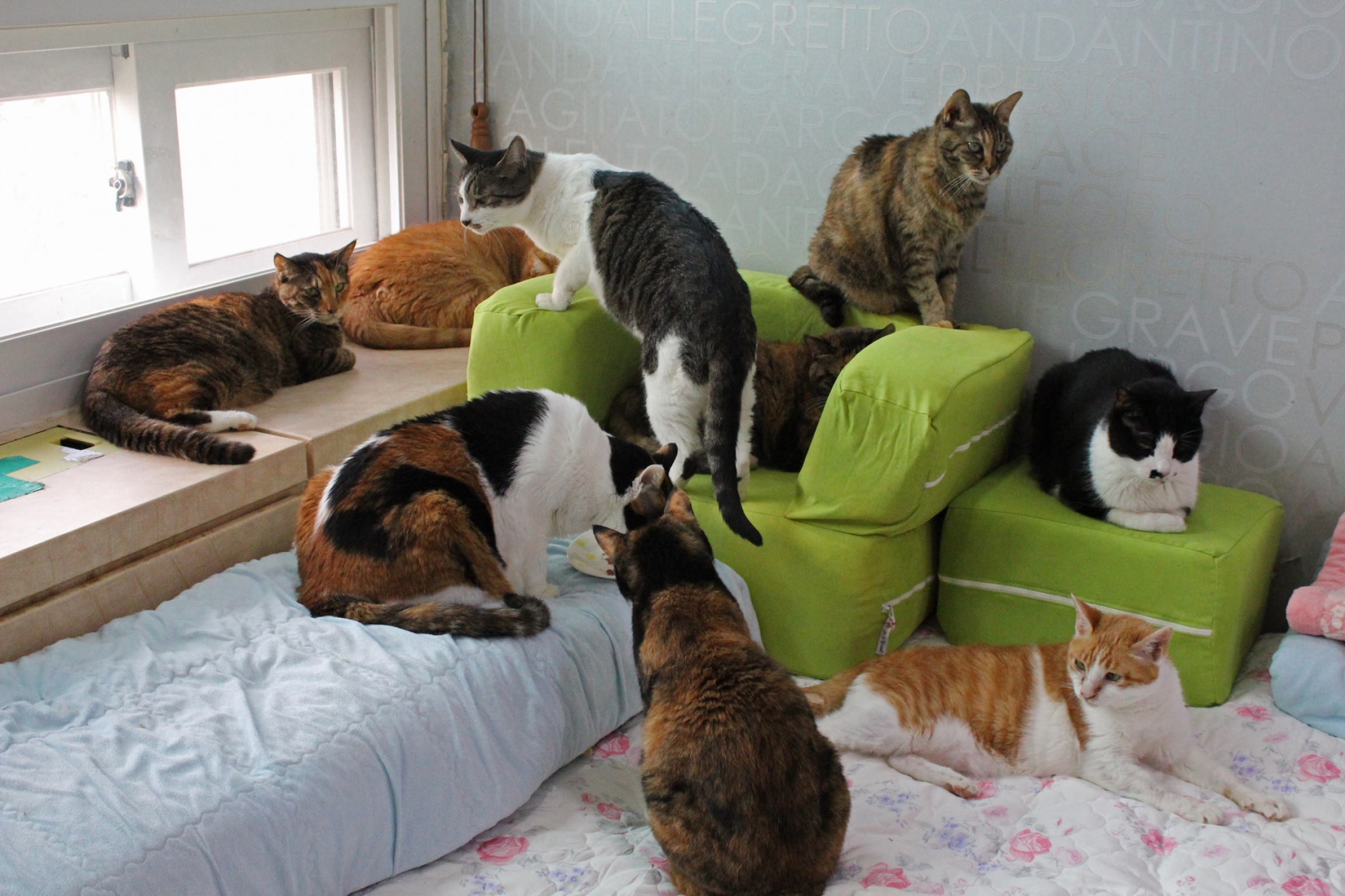 several cats lounge on green chairs in an apartment