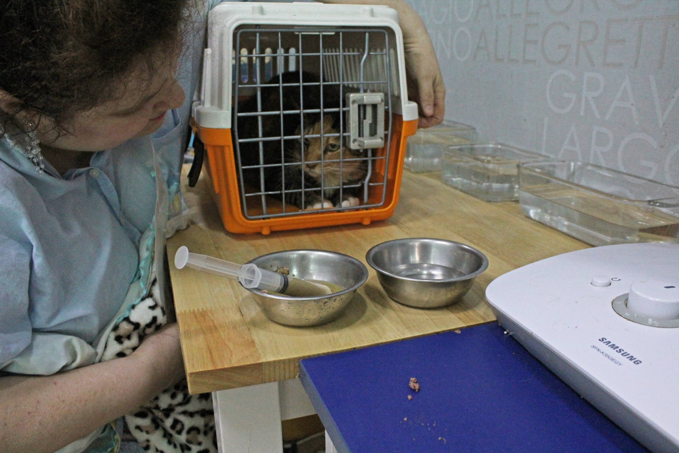 a woman looks at a cat in a cage near two silver bowls holding a syringe