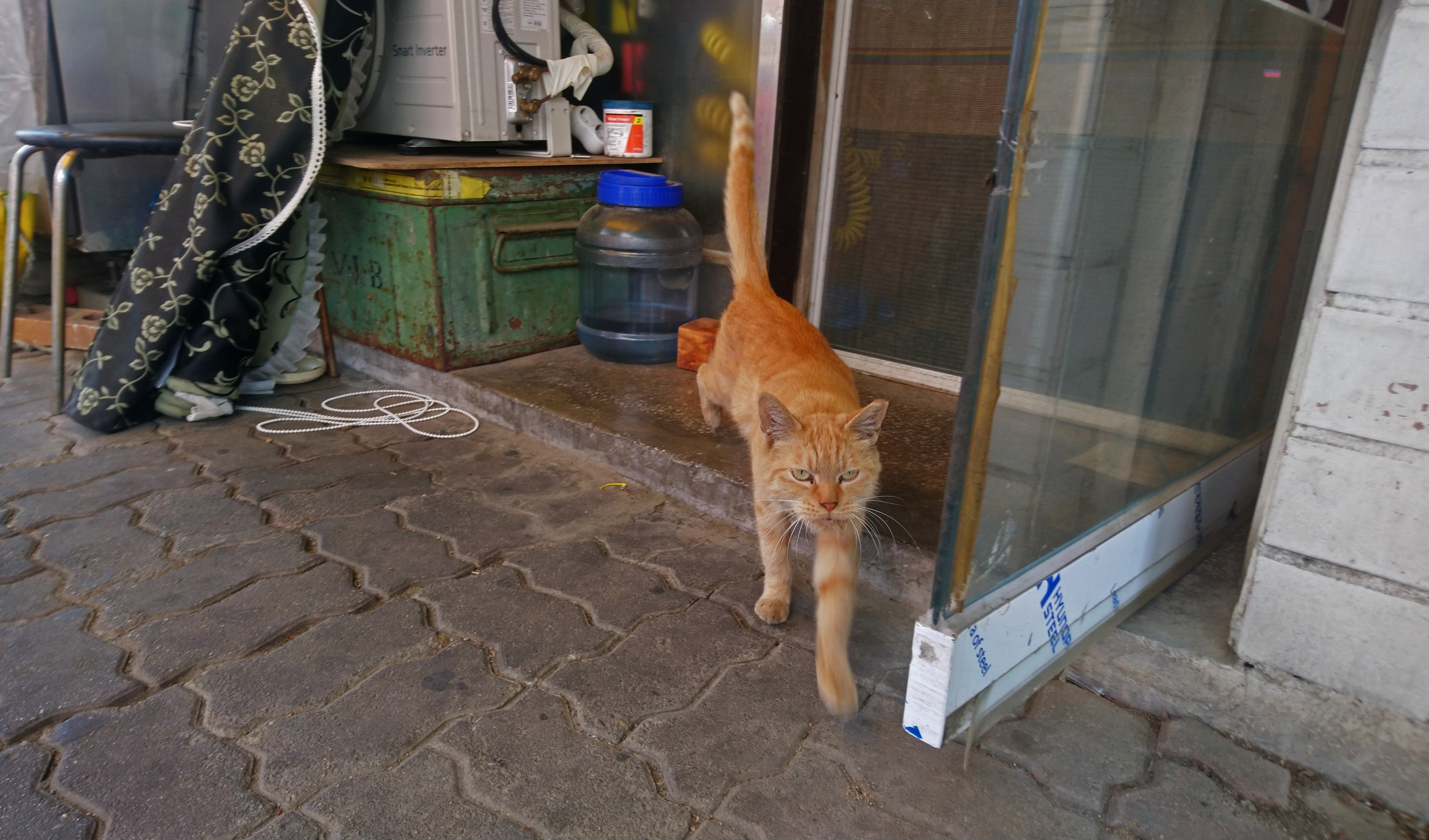 an orange cat hangs out outside a shop