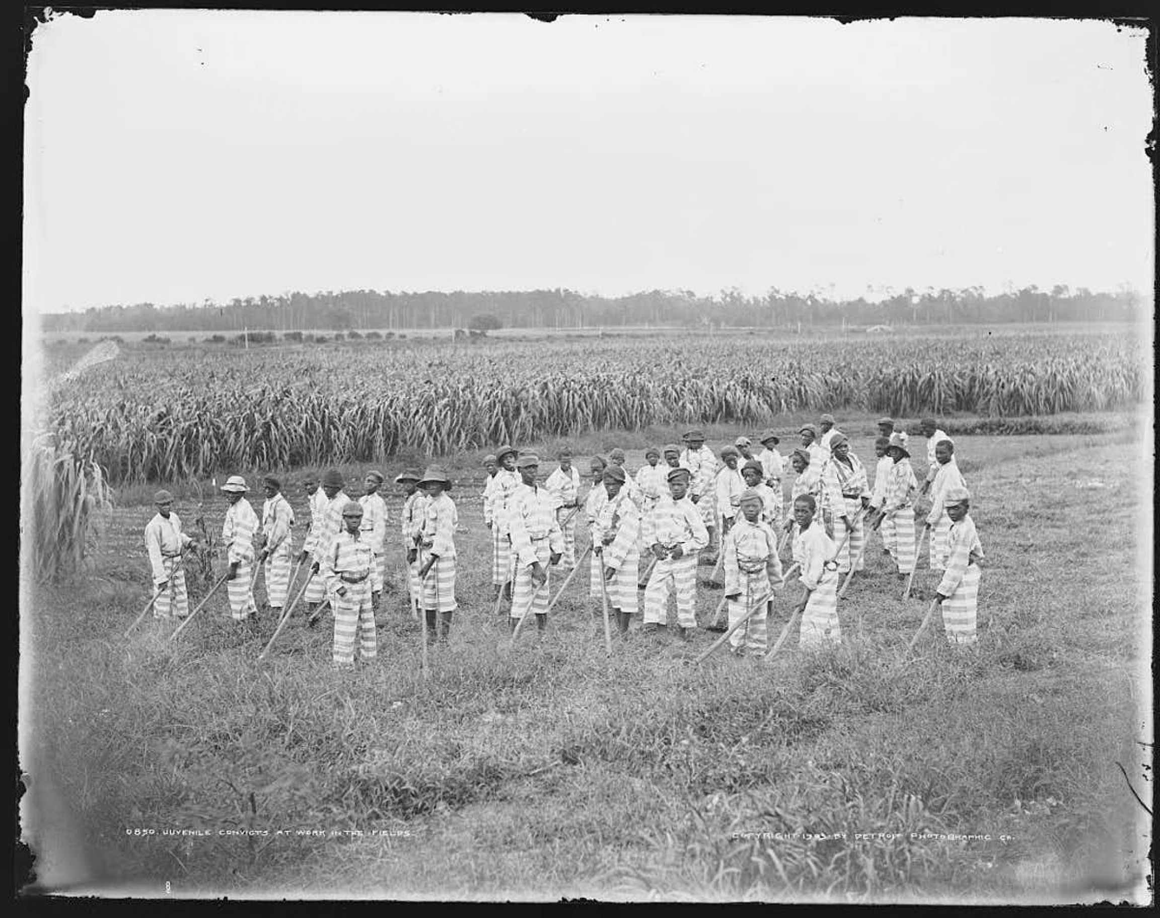 Juvenile convicts are shown at work in the fields, location unknown.