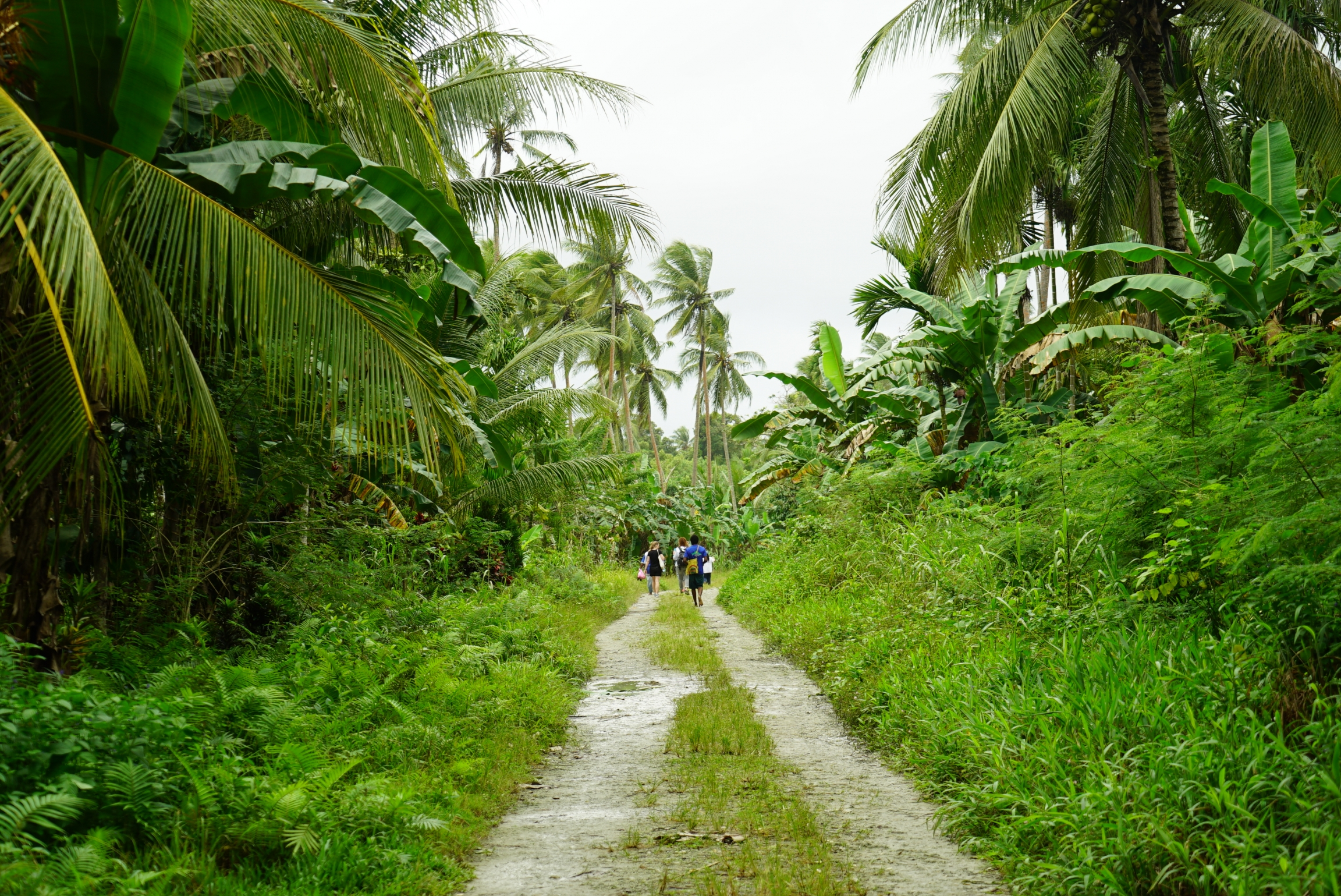 Lush greenery surrounds a narrow pitted dirt road.