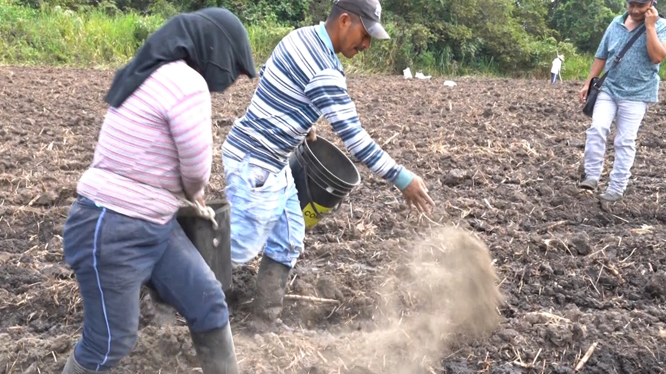 Two people toss fertilizer on the soil as one man takes a call on his mobile phone