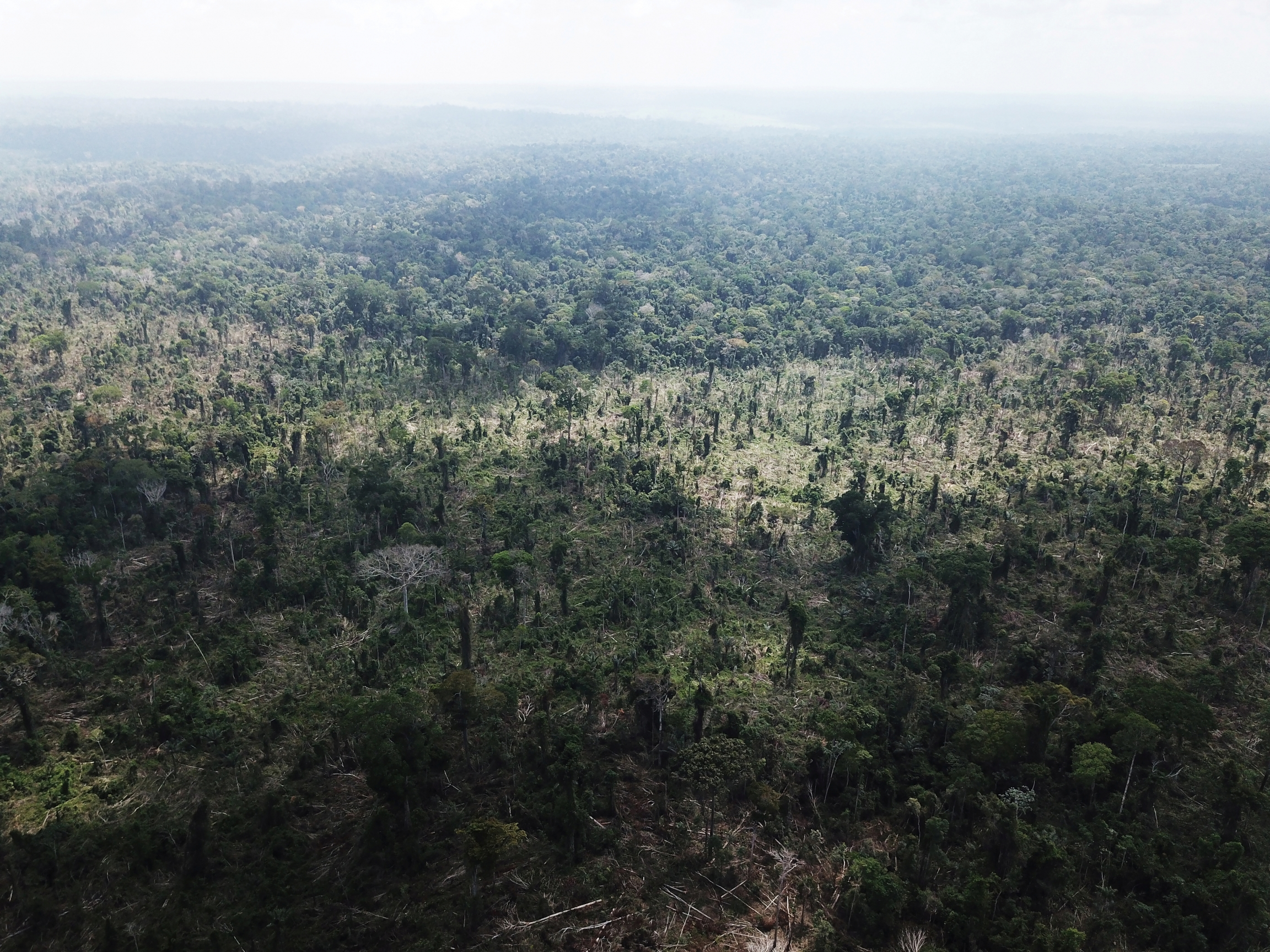 An aerial view of the Amazon with a portion cleared.