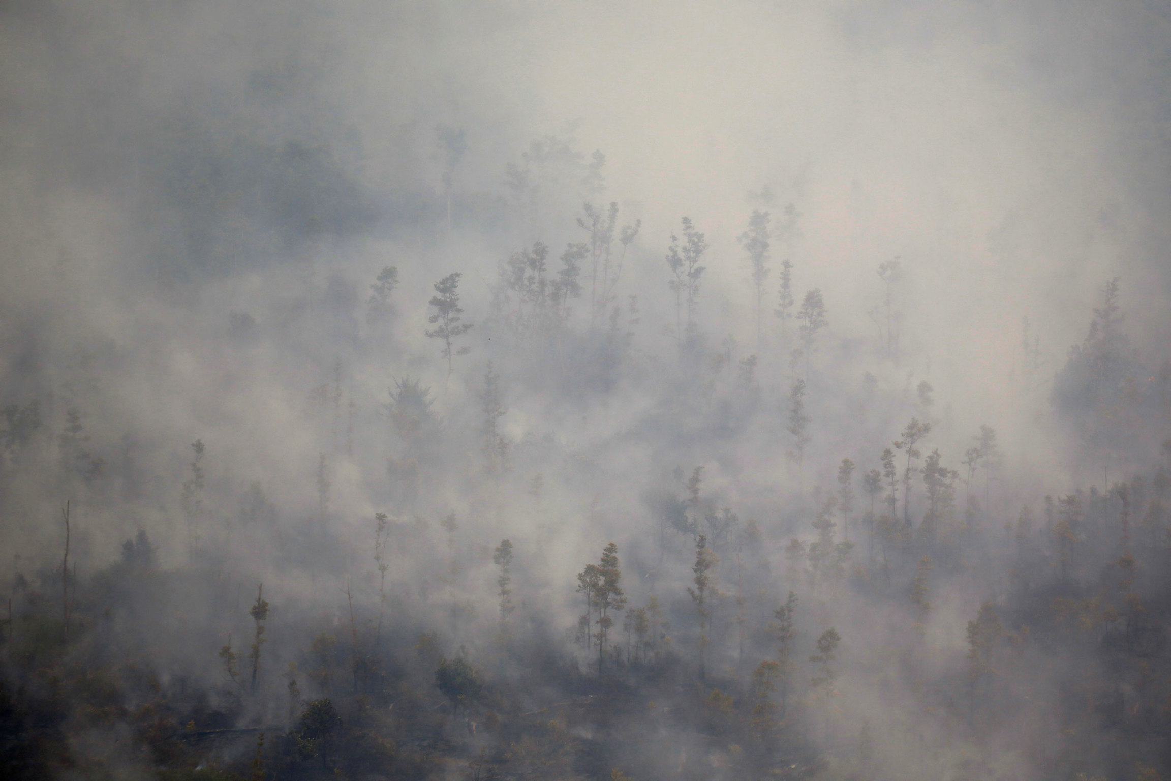 A forest is shown entirely filled with smoke.