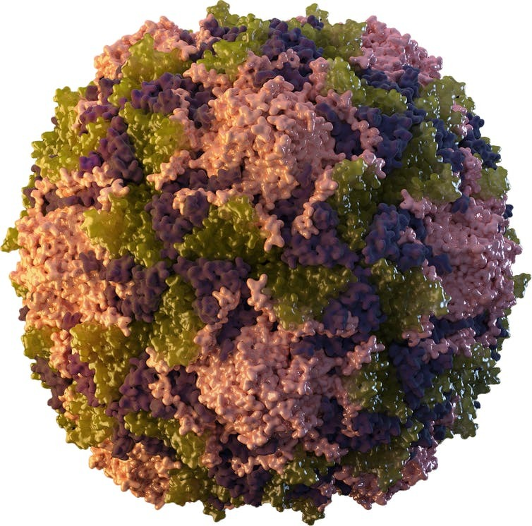 An image of a poliovirus.