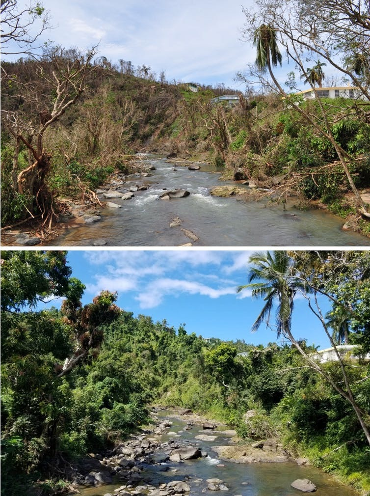 A river in the countryside of Puerto Rico, one photo with lots of water and one with little.
