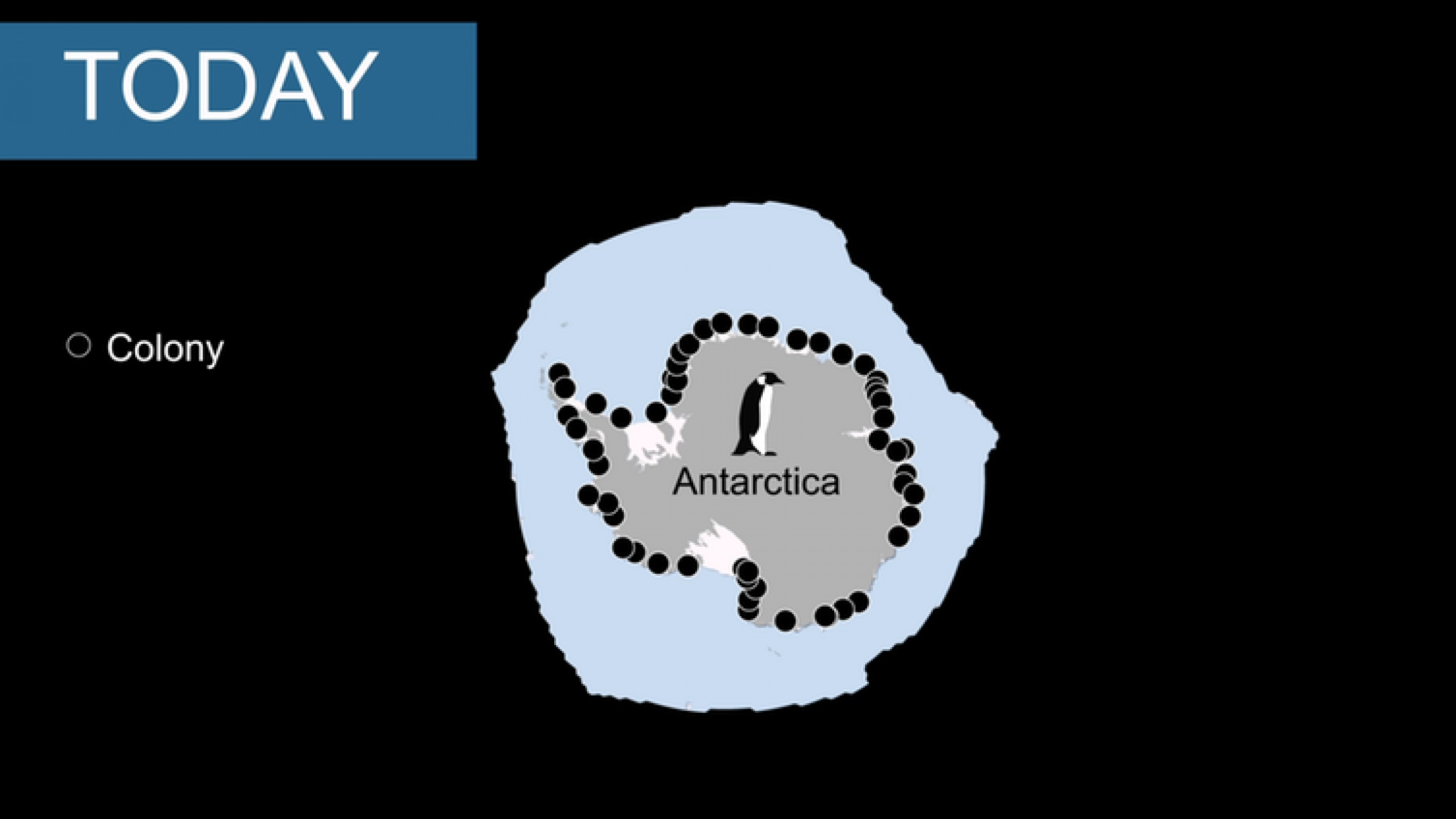 A map of penguin colonies around Antarctica.