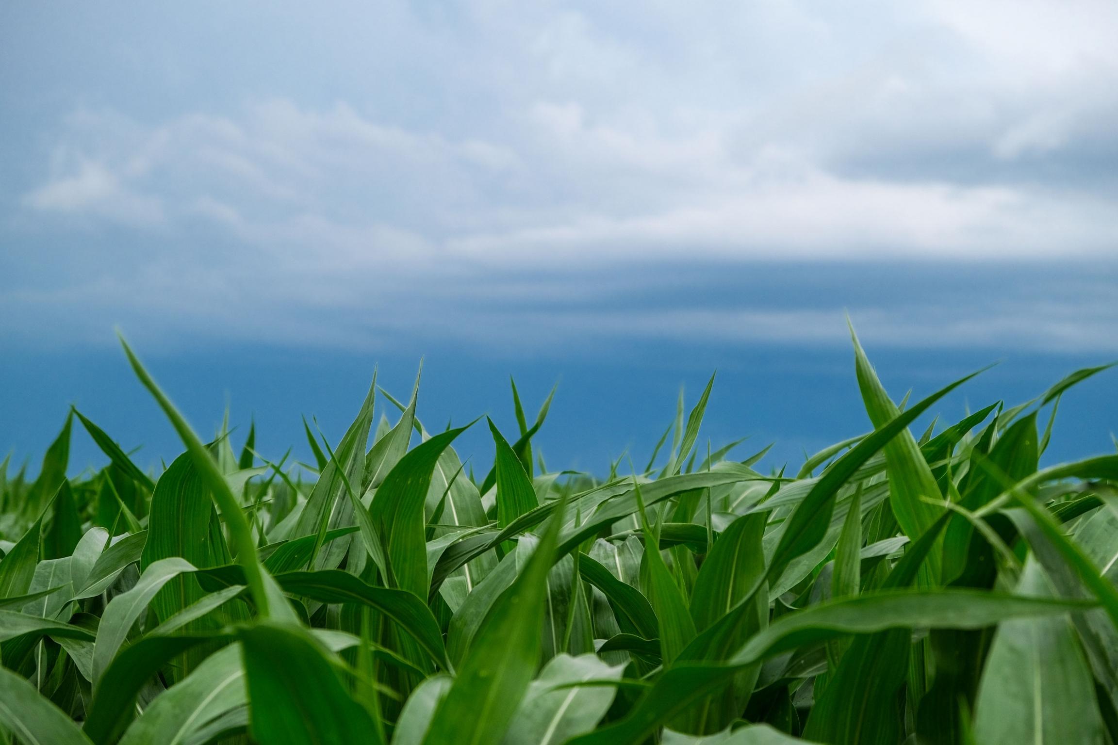 Farming S Growing Problem