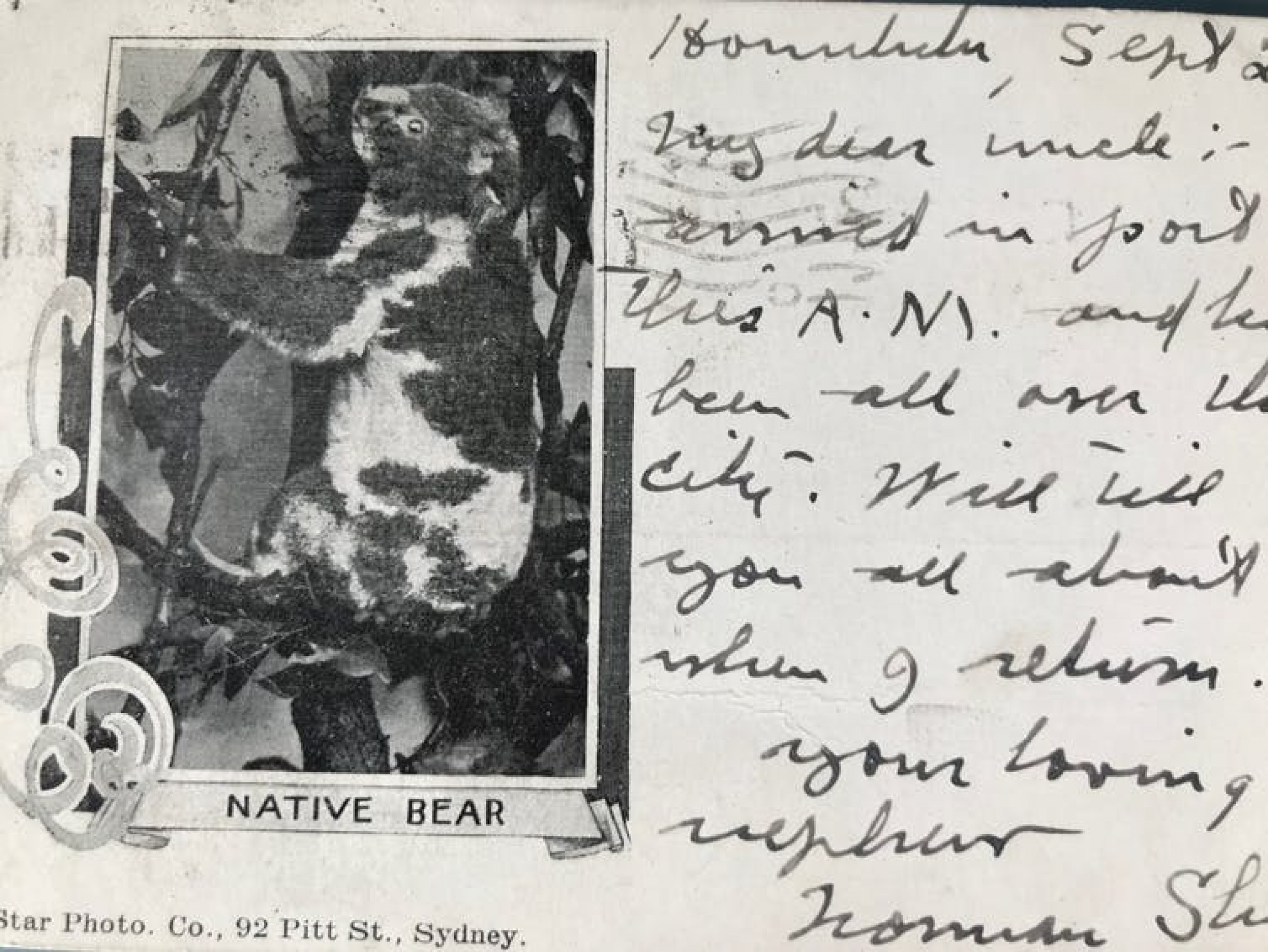 An old postcard featuring a Koala.