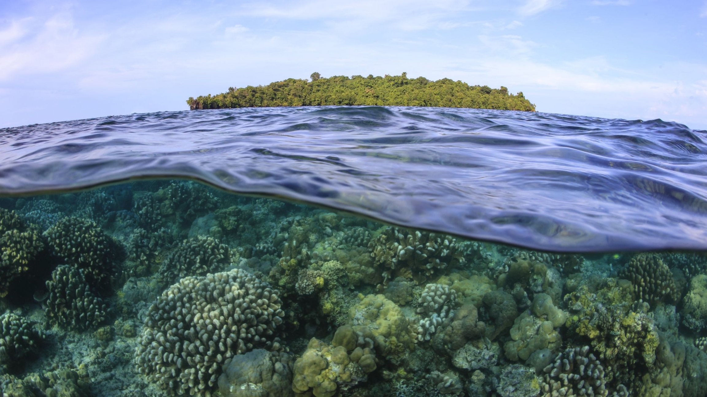 Corals grow in the shallow waters around a small island in Kimbe Bay, Papua New Guinea.