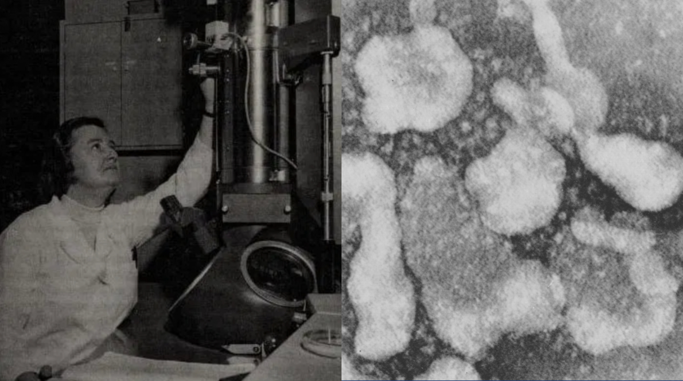 Composite of 2 pictures. One of a woman in front of a microscope and the second one of the coronavirus.