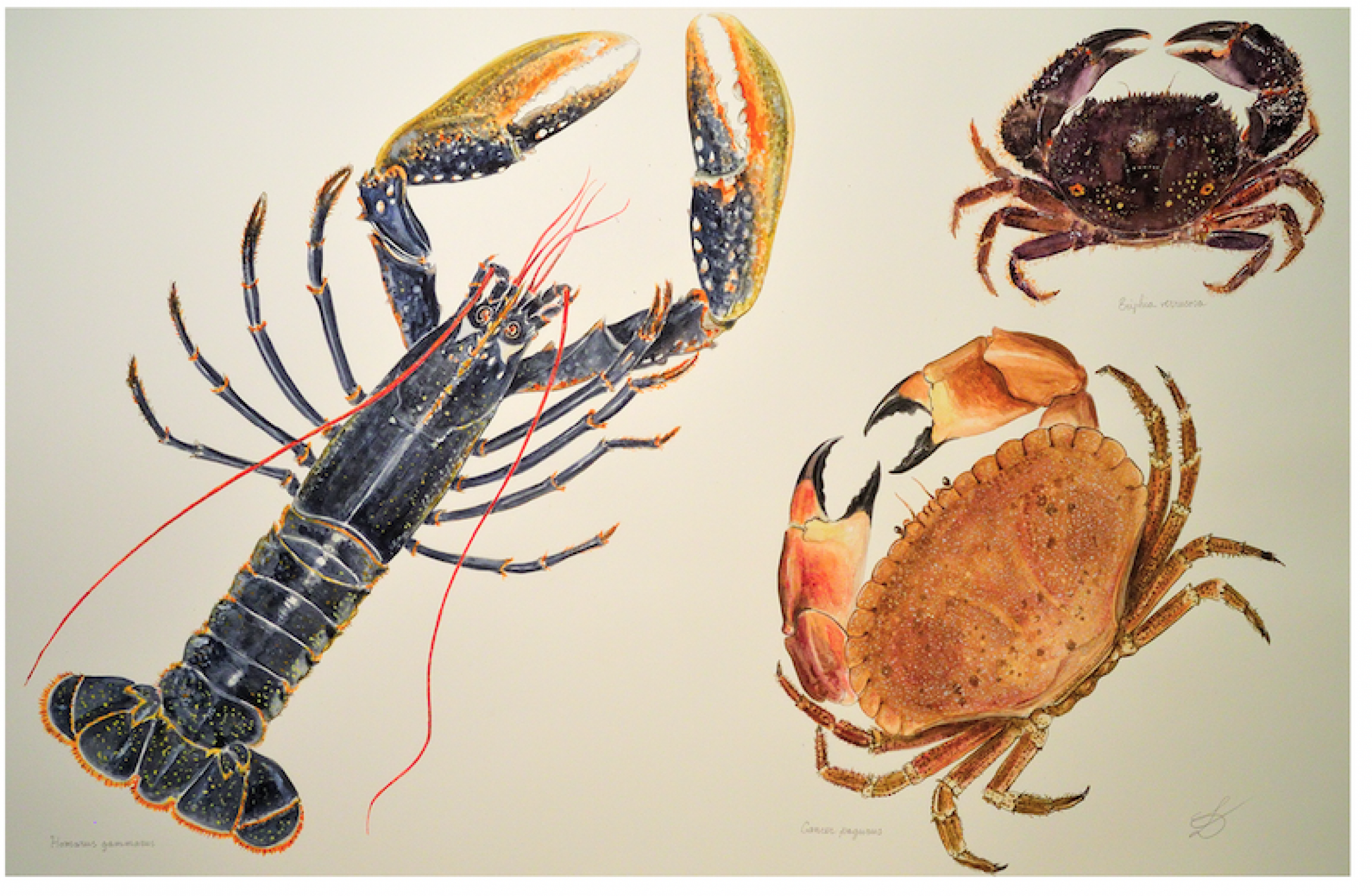 "Luigi Divari's image ""Shellfish,"" 2015, is pictured."