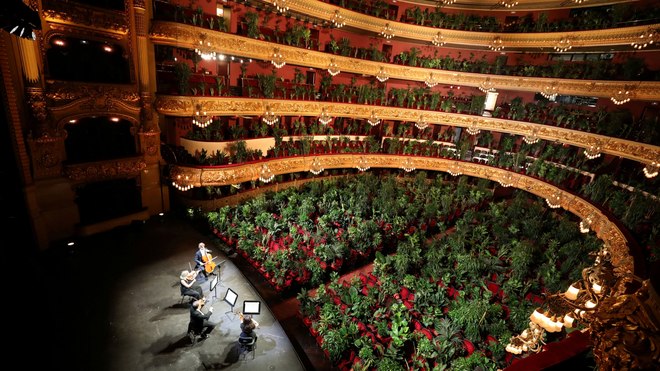 A theater is shown filled with potted plants in the chairs.