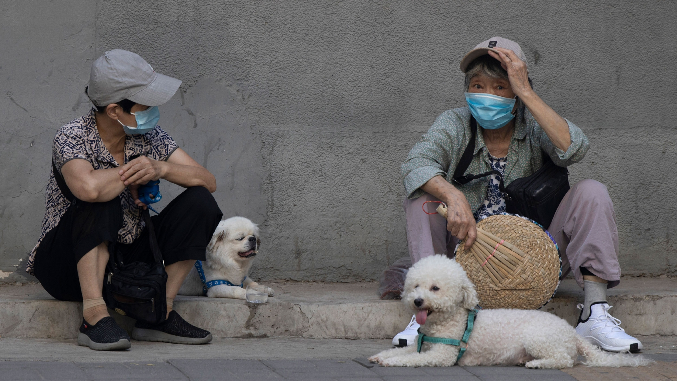 Two women are shown sitting on a small curb and wearing hats and protective facemasks with two small white dogs also sitting nearby.