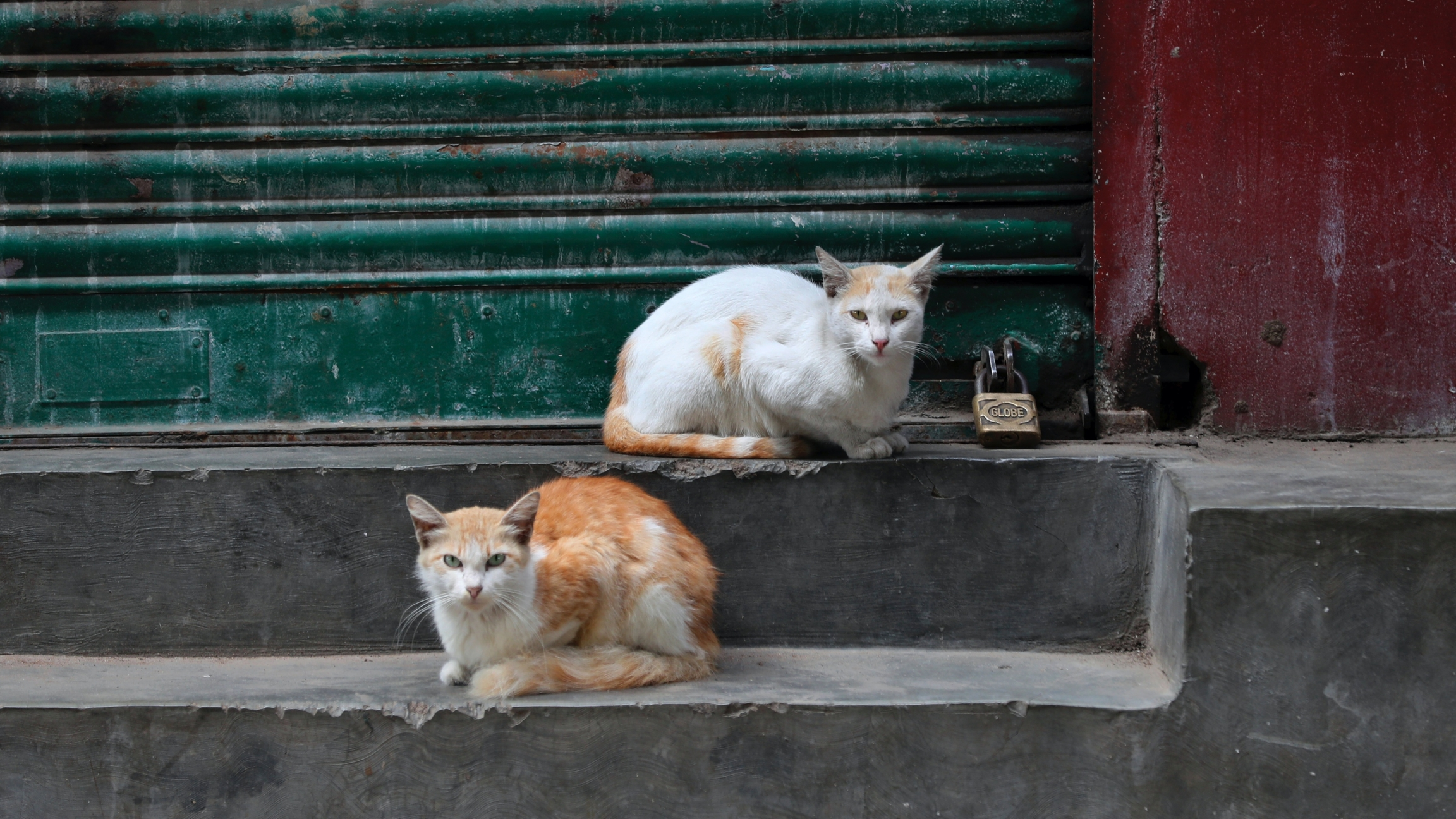 Cats rest outside a closed shop on cement steps with a red and green backdrop.