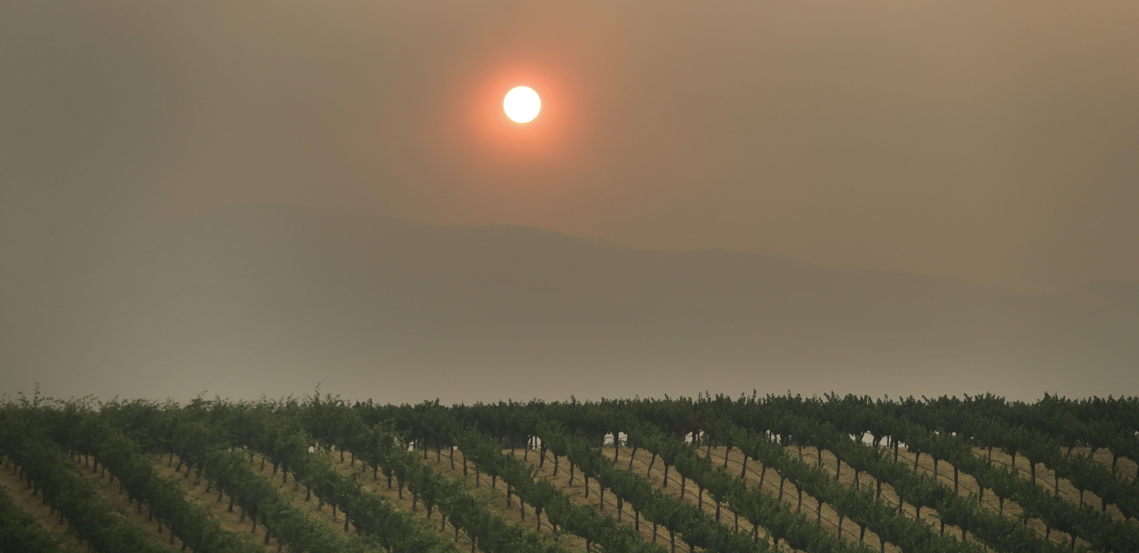 In this July 30, 2018, file photo, the setting sun is reddened by smoke from a wildfire over a vineyard, in Finley, California.