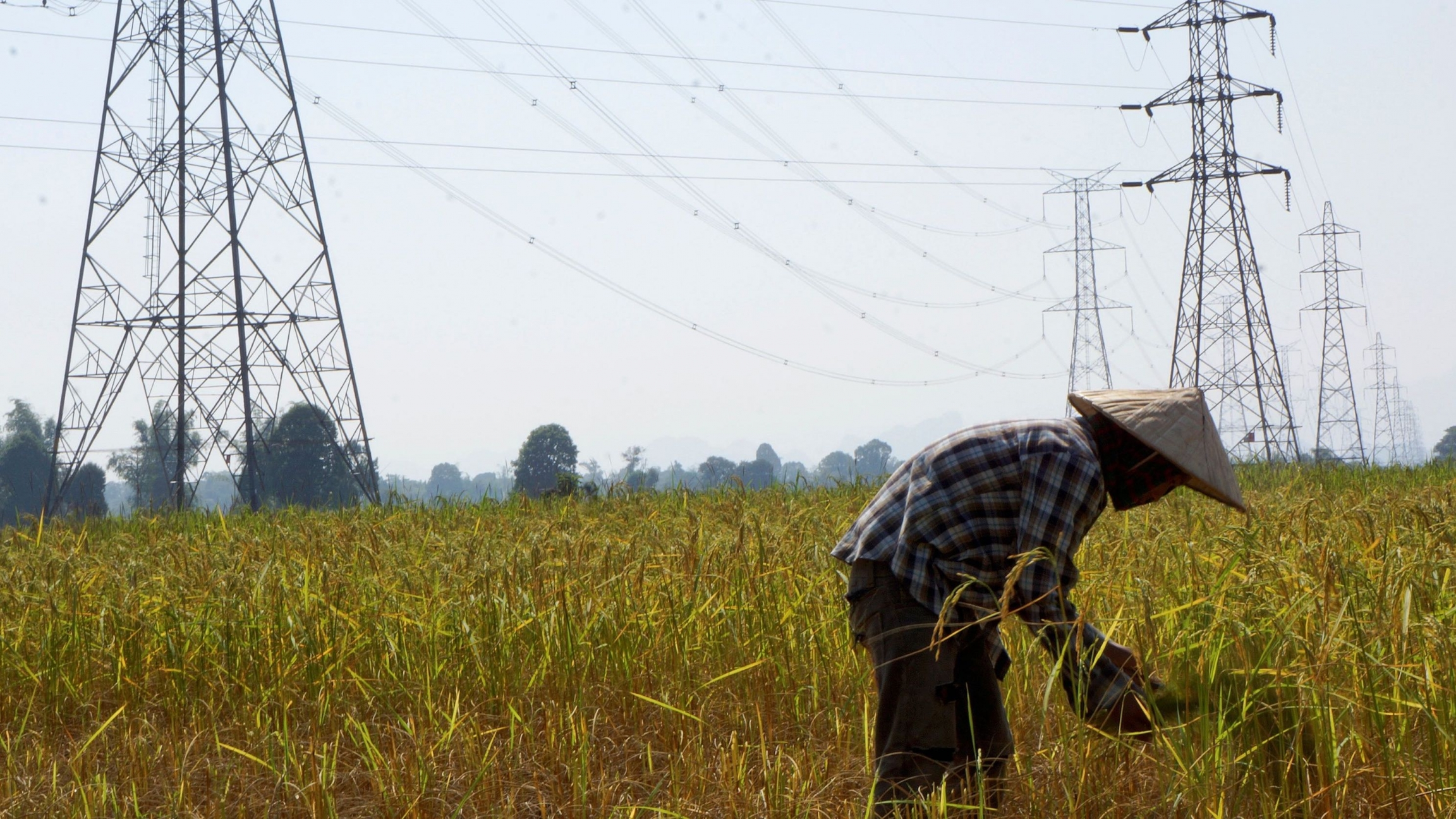 A farmer works in a paddy field under the power lines near Nam Theun 2 dam in Khammouane province in Laos, Oct. 28, 2013.