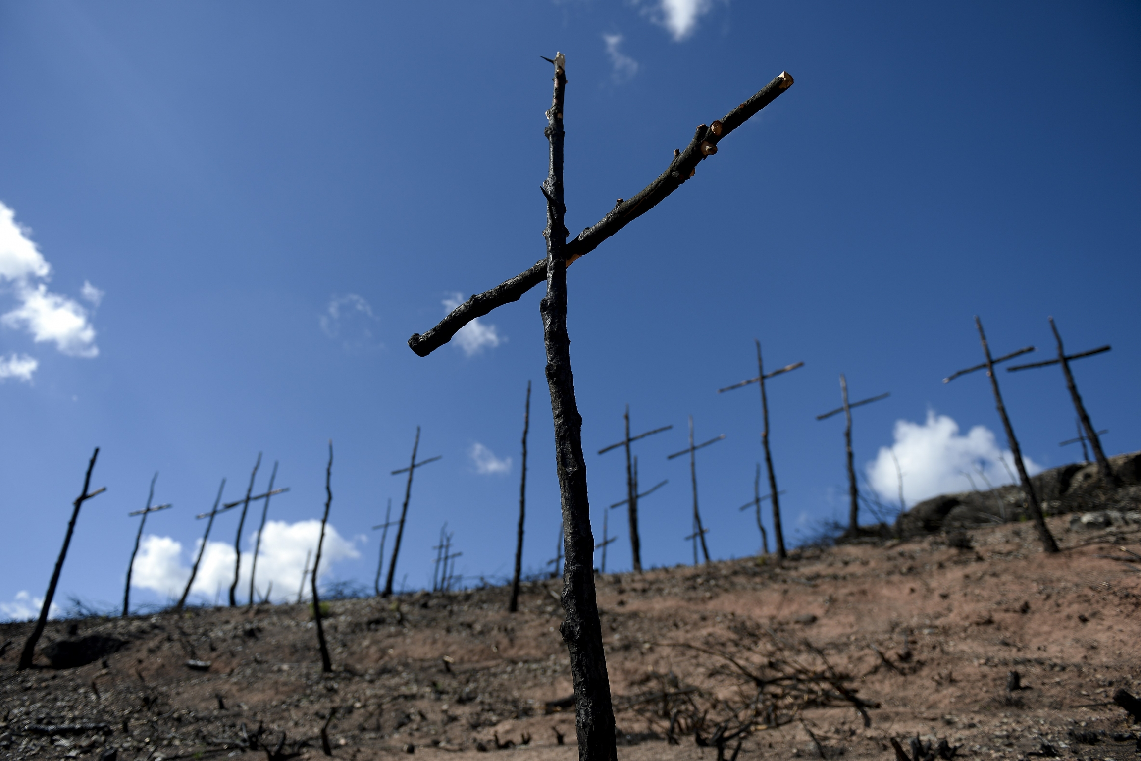 Standing wooden crosses.
