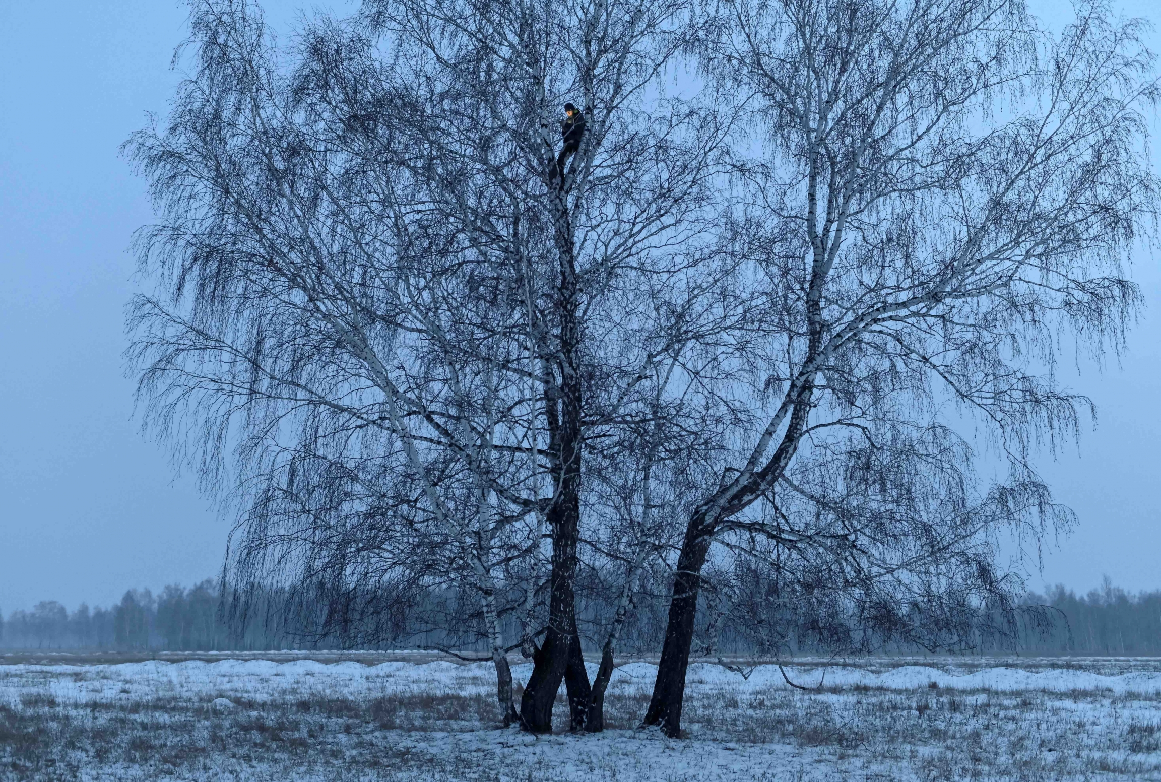 A man is photographed at the top of a tree in a field covered with snow.
